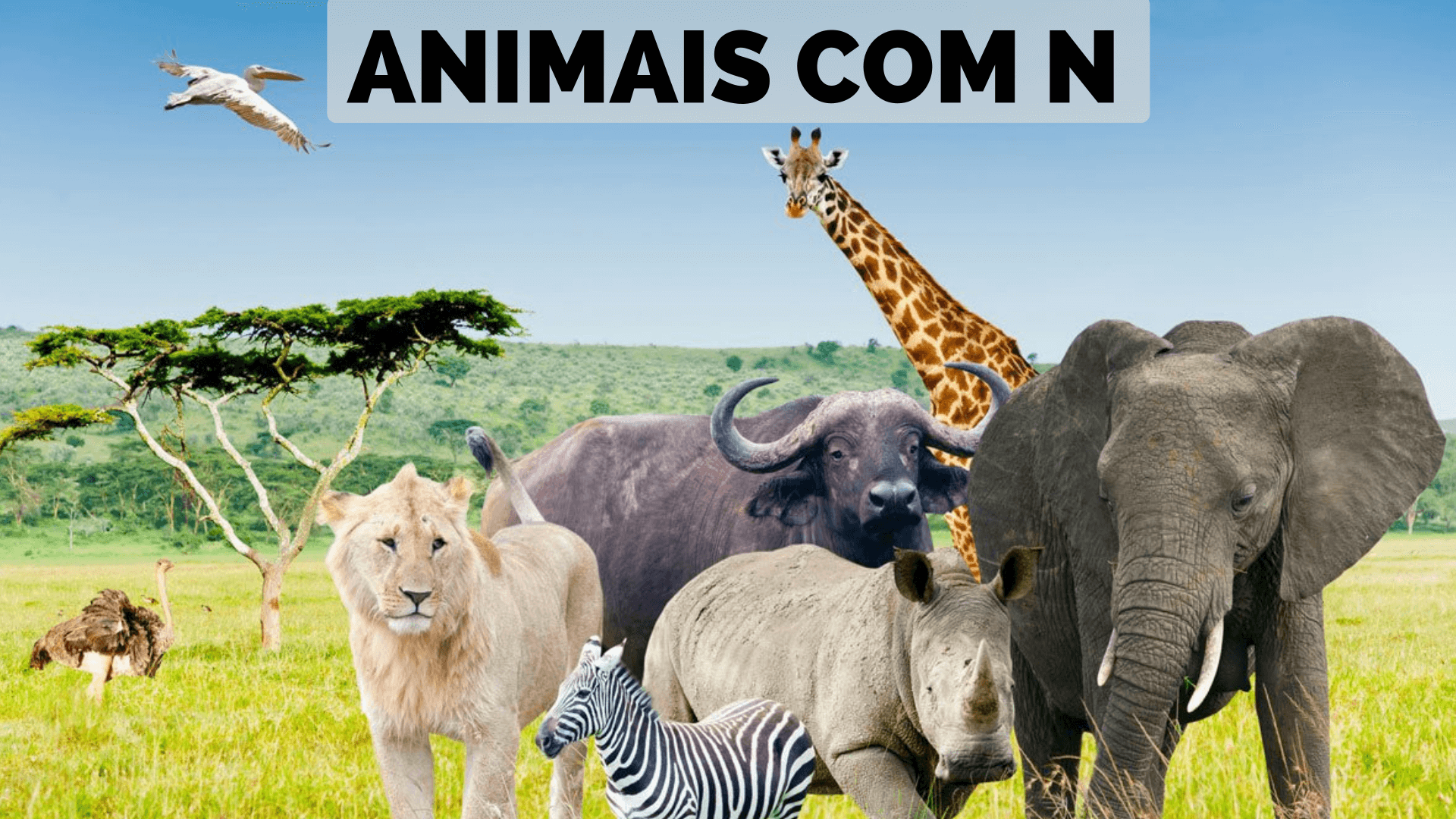 You are currently viewing ▷ Animais Com N 【Lista Completa】