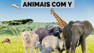 Read more about the article ▷ Animais Com Y 【Lista Completa】